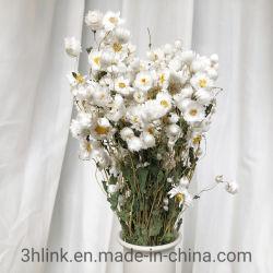白のドライフラワーブーケ花束、白のドライフラワーブーケ、ナチュラルホワイトの花