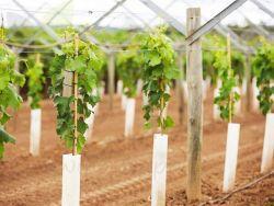 Boombeschermers/ PP-plantenbeschermer/ kunststof boombeschermers/tuingereedschap voor Bescherming van planten/Tuingereedschap/Plantenbescherming/Boombeschermers/Golfplaten