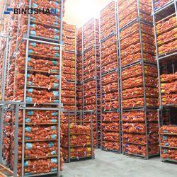 Industrielle Logistik Fisch Gemüse Obst Meeresfrüchte Zwiebel Gefrierschrank Kühlraum Lagerung