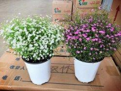 Starke Felgen-Plastikblumen-Potenziometer für Sämaschine und Umpflanzer