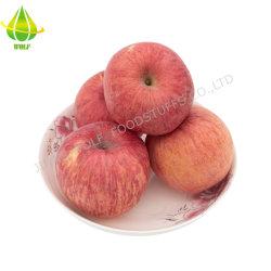 تفاح فوجي الأحمر الطازج/تشنغان Apple/Huaniu Apple/Gala Apple/Green Apple/Red Star Apple