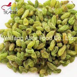 干しぶどうの新彊の卸し売り中国の緑のブドウ