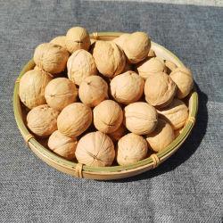 중국 신장 고급 호두 원료를 판매하는 셸의 핫 셀링 좋은 가격