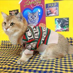 Melhores desenhos animados de moda Design em malha pano de cães de estimação flanela macia, T-shirt do Pet cubra, algodão vestuário exterior para gatos