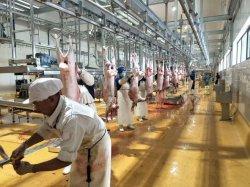 Linea di macellazione musulmana lavorazione della carne di capra macellaio di taglio Abattoir attrezzatura
