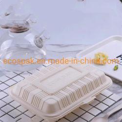 Contenitore da portar via degradabile di contenitore da portar via concimabile di amido di granturco con la casella di pranzo ecologica del coperchio