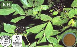 Het Uittreksel Eleutherosides 0.8%-1.5% van Gracilistylus van Acanthopanax door HPLC