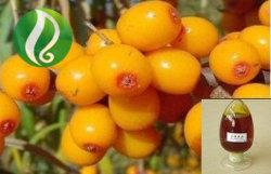100%健全な食糧のための純粋なSeabuckthornのフルーツオイル