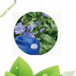 Resinoid Uittreksel van het Witlof van de Kruiden van de natuurvoeding en van de Tabak