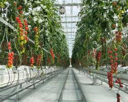 دعم زراعة الخزانات الزراعية في مرافق الصابون الصلبة الذكية المسببة للاحتباس الحراري