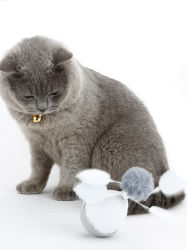 도매업자 Eco 디자이너 새로운 지능적인 플라스틱 고양이 훈련 장난감 다른 애완 동물 제품