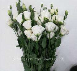 Regalos Christams Bouquet floral de flores frescas cortadas Eustoma blanco para decorar