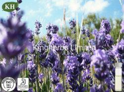 Olie van de Lavendel van de hoge Zuiverheid de Natuurlijke met ISO- Certificaat