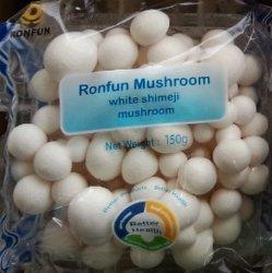 Белый гриб Shimeji