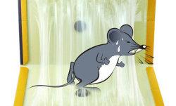 Rat /Camundongos Armadilhas Cola Board, Placa de cola de papel, pegajosas Caçador Rato roedor