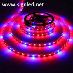 Рождественских елок оформление красочные светодиодный индикатор строки/LED газа освещение