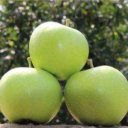 Il nuovo raccolto Austrilian Apple verde