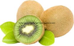 Nova colheita de frutas kiwi frescos de alta qualidade