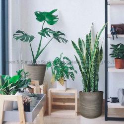 Soem-Fabrik-Großverkauf-populäre neue Entwurfs-europäische Art-natürlicher schauender gerader Plastikblumen-Potenziometer-Pflanzenpotentiometer-Garten-Pflanzer