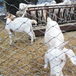 Boîtier en acier inoxydable d'animaux du zoo de Wire Rope filet à mailles