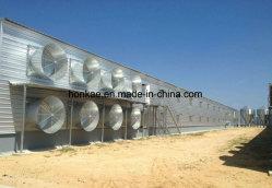 Galvanisé à chaud préfabriqués Structure en acier H-Section de la volaille hangar de poulet
