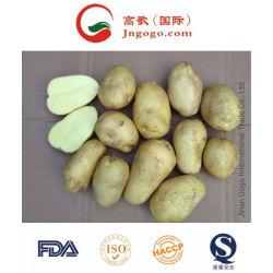 새로운 작물 신선한 감자 칩 (200g는 올린다)
