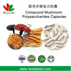 Hongo Chaga compuestos polisacáridos cápsulas cápsulas de extracto complejo