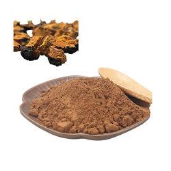 신체 내성 향상을 위한 고품질 Chaga Mushroom Extract