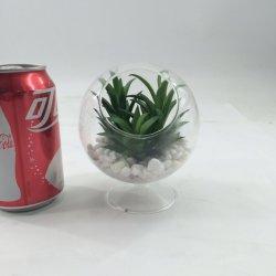 Bush Plantas suculentas Artefactos artificiais