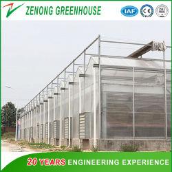 Professional PC policarbonato Casa Verde para cultivos hidropónicos/Vegetal y cultivo de flores