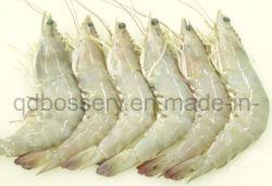 Congelados camarón blanco