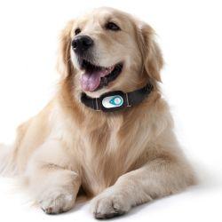 Collier pour chien GPS tracker GPS étanche pour les animaux de compagnie R19