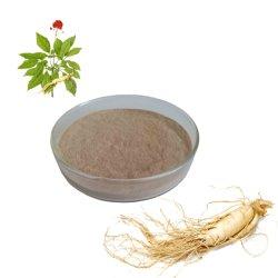 Hochwertiger Puder Ginsenosides Ginseng-Wurzel-Auszug