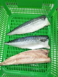 Halal Gefrorene Atlantic Makrelenfilet, Saba Filet