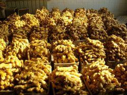Frischer Ingwer aus Shandong China für Export/Gemüse