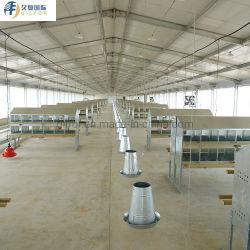 Der Export Standers der große Schuppen-Stahlkonstruktion-Huhn-Bauunternehmen-Entwurfs-Geflügel-Landwirtschaft verschüttete mit gewölbtem Stahlblech
