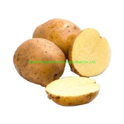 2020 nouvelle récolte de pommes de terre fraîches avec un bon prix