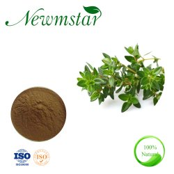 Factory Hot Sale Thymus Ronnwith Mongolicus extraire; commun Thym extrait, additif alimentaire