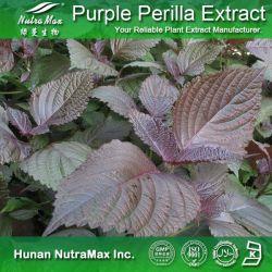100% naturel Perilla Seed Extract en poudre (4 : 1, 10 : 1, 20 : 1)