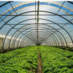 Fertilizantes solúveis em água fosfato dipotássico (DKP) com uma pureza elevada