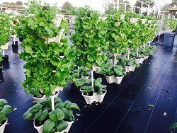 5 niveau fraise empilables, Herb, fleur, et de légumes - Semoir jardin vertical intérieur/extérieur
