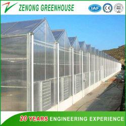 Tipo Venlo PC Invernadero con materiales de construcción del bastidor de acero galvanizado y láminas de policarbonato que cubren de sólida construcción