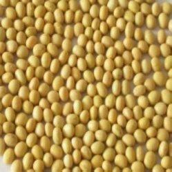 De Isoflavoon GMP ISO van de soja