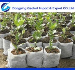 PP Non Tessuto Spunbonded Utilizzato per borse per vivai in giardino