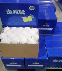 Свежий Китайский Ya Pear (36.40.44.48)
