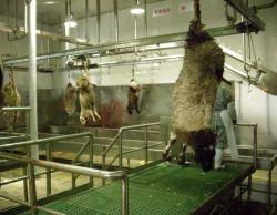 자동 디자인 선 및 기계장치 또는 가축 양 돼지 Slaughtering 장비