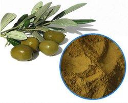 천연 올리브 잎 추출물 분말 식물 CAS 번호 32619-42-4