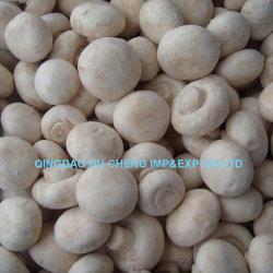 Congelados Cogumelo Champignon