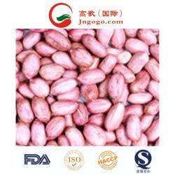 Nova pele vermelha de alta qualidade da colheita de grãos de amendoim (24/28, 28/32)