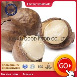 Melhor Venda por grosso de matérias-Melhor Preço Macadâmia/ Chicória Big Kernel Macadamia
